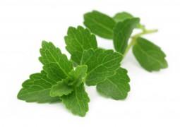 Feuilles de stevia
