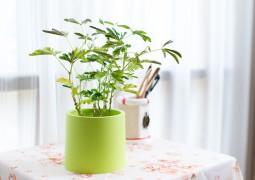 Pot en plastique pour y mettre nos plantes vertes