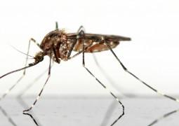 Solution-anti-moustique