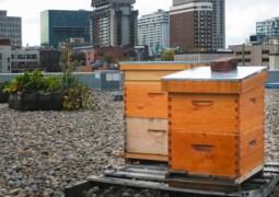 ruches placées sur un toit en pleine ville
