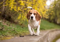 chien marchant sur un mur autour d'un bois ou de végétation