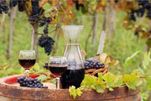 vin du languedoc